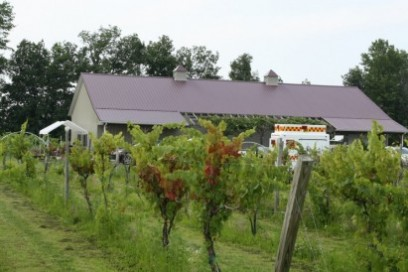 Soine Vineyards