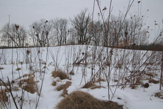 Prairie Oaks 18