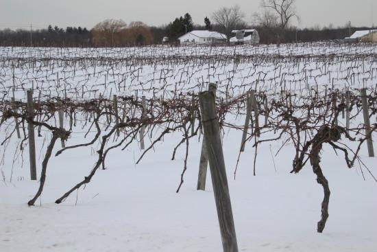 NE Wine 16