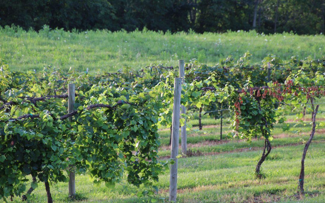 Rockside Winery & Vineyards