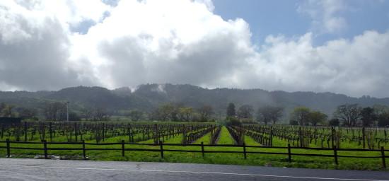 Napa Valley, California ~ www.ohiogirltravels.com