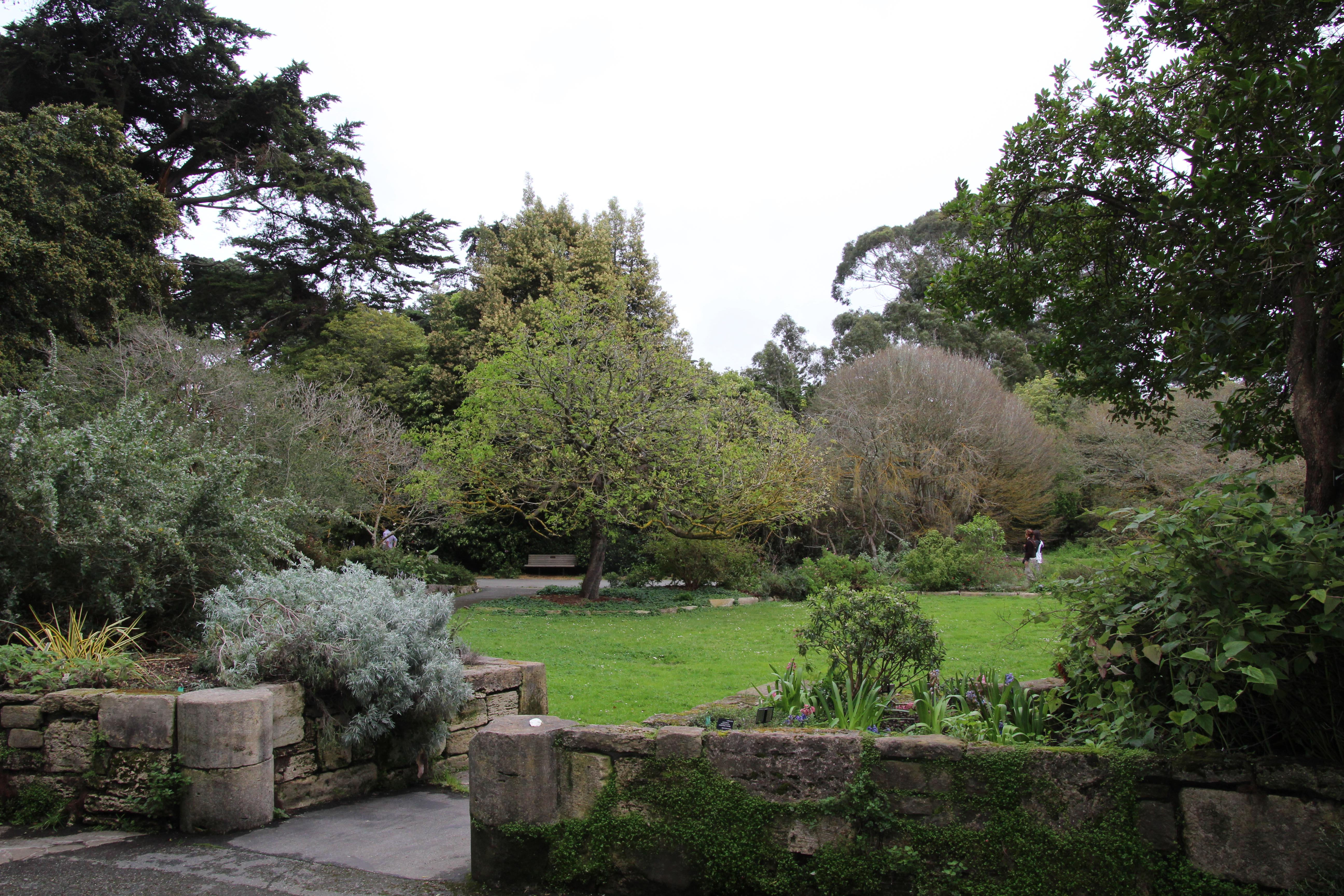 San francisco botanical garden ohio girl travels for San francisco botanical gardens