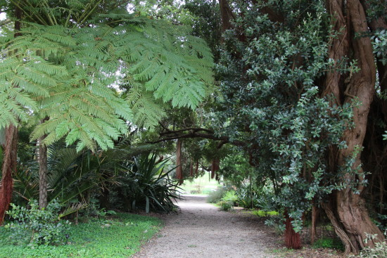 San Francisco Botanical Garden ~ www.ohiogirltravels.com