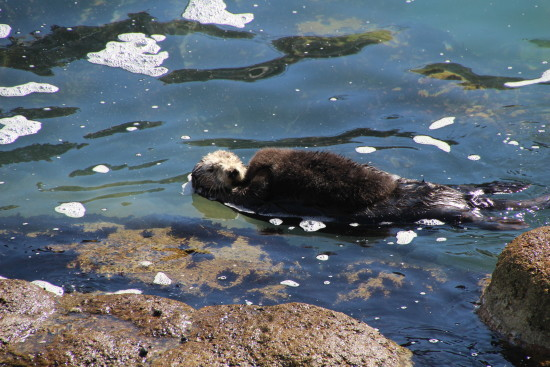 Monterey, California ~ www.ohiogirltravels.com