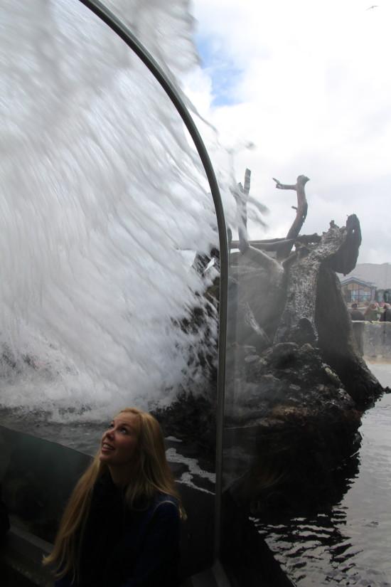 Monterey Bay Aquarium ~ www.ohiogirltravels.com