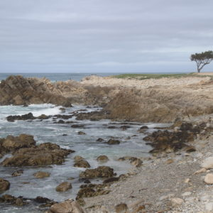 17-Mile Drive, California ~ www.ohiogirltravels.com