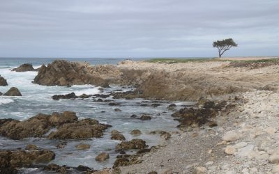 The Stunning 17-Mile Drive at Pebble Beach