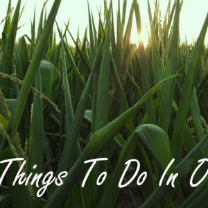 www.ohiogirltravels.com