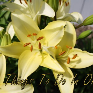 15 Things To Do In Ohio ~ www.ohiogirltravels.com