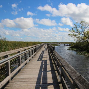 Point Pelee National Park, Ontario, Canada