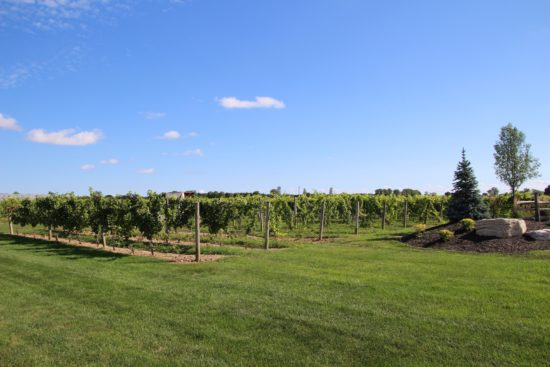 EPIC Wine Country, Ontario, Canada ~ www.ohiogirltravels.com