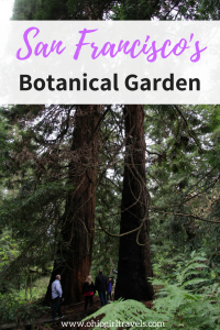 We LOVED the San Francisco Botanical Garden in California. It was such a relaxing and beautiful place in the San Francisco Bay area. If you're looking for things to do in San Francisco Bay, you'll definitely want to add the Botanical Garden to your list. Don't forget to save this to your travel board! #sanfrancisco #california #botanicalgarden