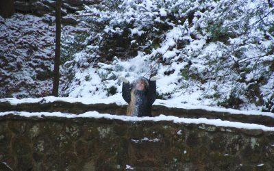 14 Fun Hocking Hills Winter Activities