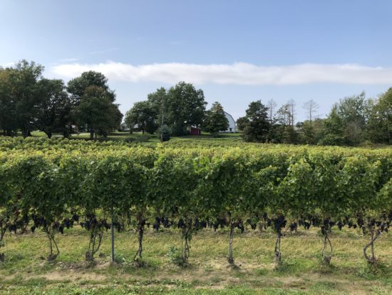 Ohio Wine Country in Ashtabula County