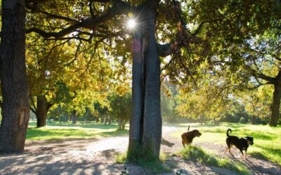 Pet Friendly Things To Do In Hocking Hills, Ohio